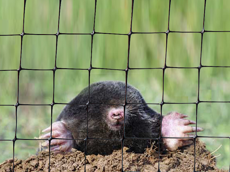 Anti-mole netting