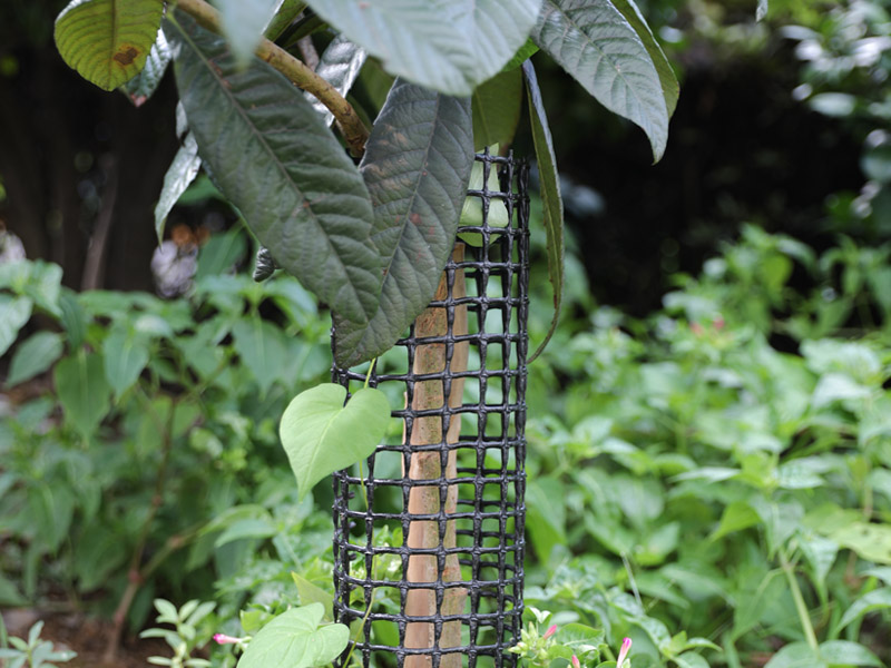 Fruit Cage netting