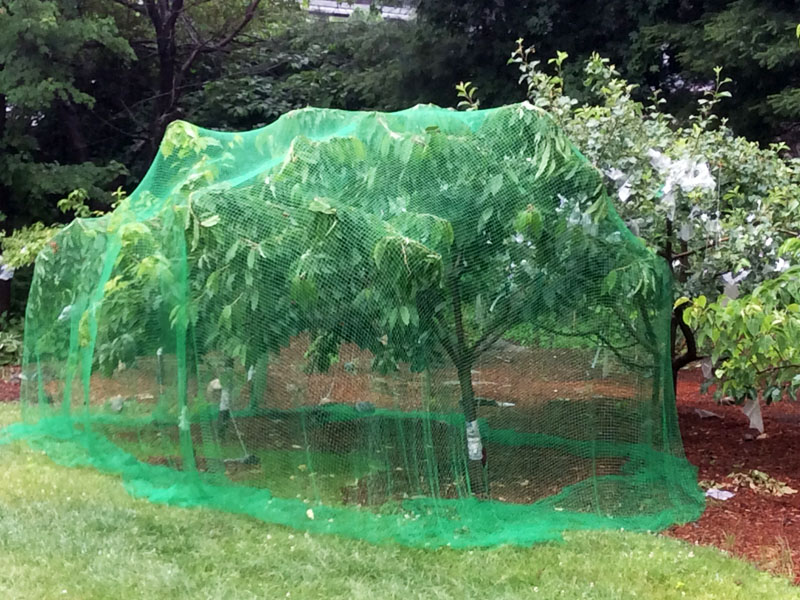 Tree protective netting