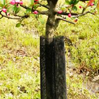 tree-tube-s